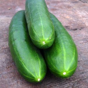 Cucumber Akito F1