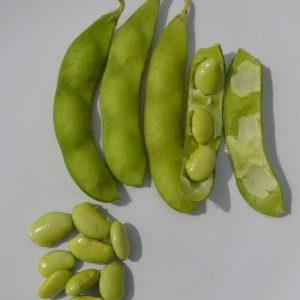 Edemame Beans Green Shell