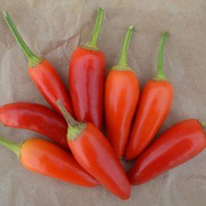 Pepper Barak