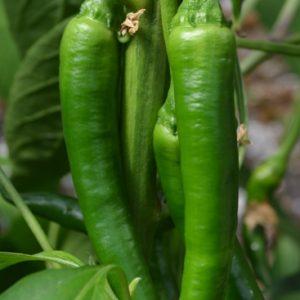 Pepper Slim Jim