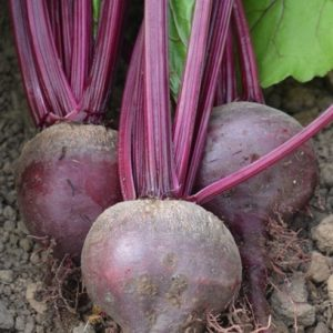 Beetroot Detroit Globe