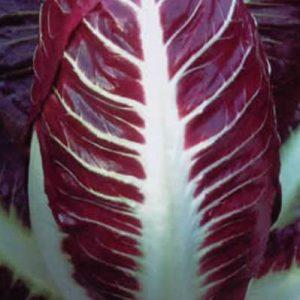Chicory Rossa Di Treviso