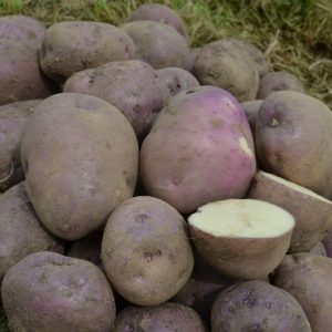 Potato Arran victory