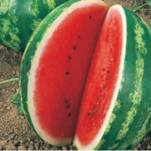 Water Melon Crimson Sweet