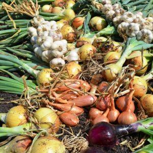 Organic Garlic, Onions & Shallots