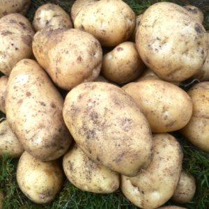 Organic Potatoes & Artichokes